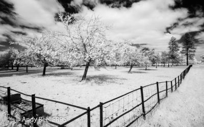 5 Ways to Improve Your Infrared Photography